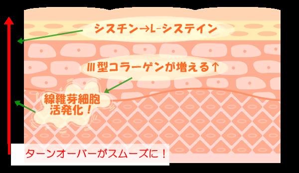 卵殻膜の美肌効果